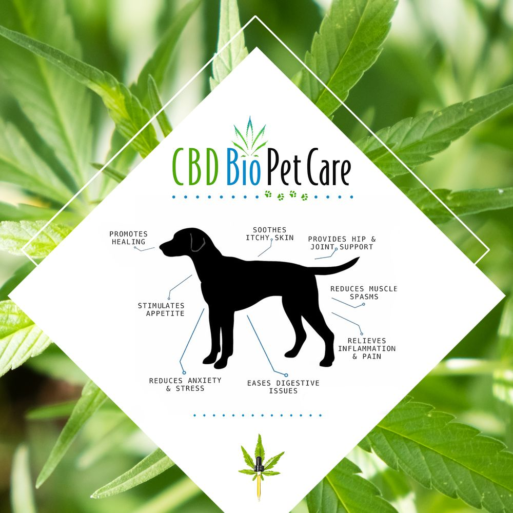 cbd for pets palm desert